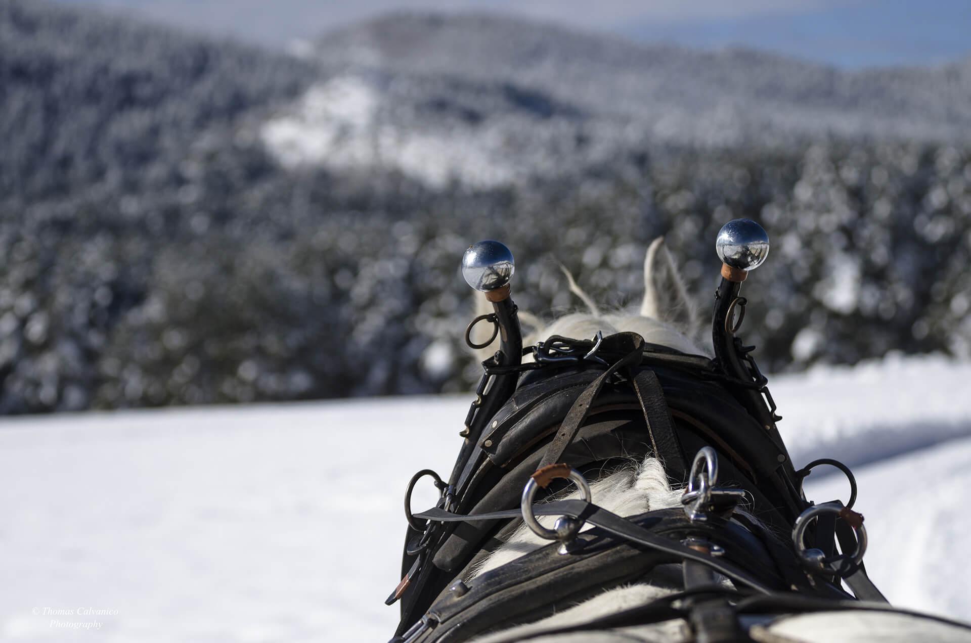 Guided horse-drawn sleigh